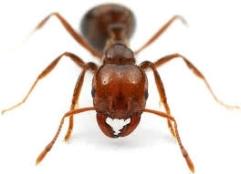 Dedetização de Formigas